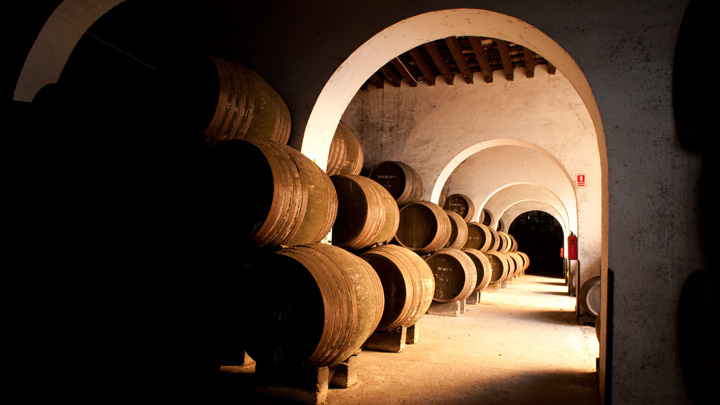 Wine and olive oil tours