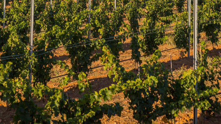 Wine&Nature in Rueda