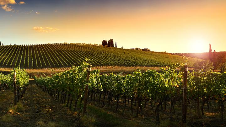 Aspectos geográficos que influyen en el viñedo